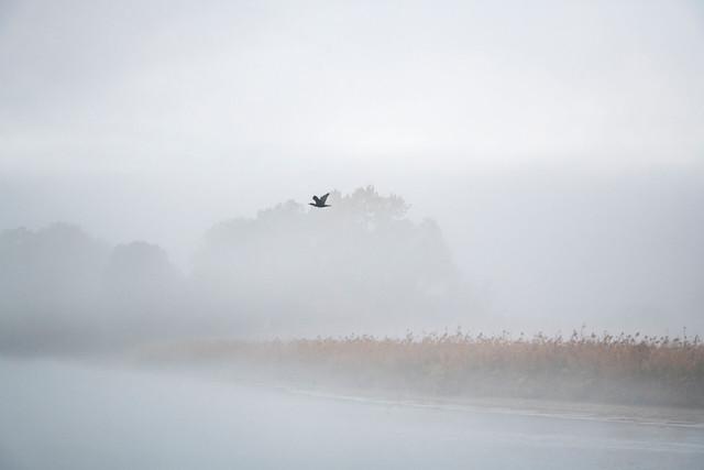 Konstanz-Seerhein-Landschaft-Nebel-Ried-Schwan-01_Herbst_Copyright_MTK-Dagmar-Schwelle
