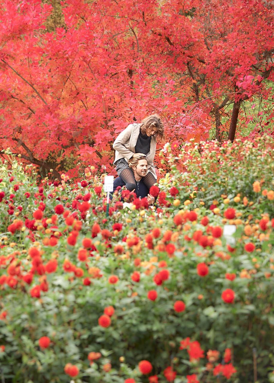 Konstanz-Insel-Mainau-Blumen-Paerchen-Huckepack-Querformat_Herbst_Copyright_MTK-Hari-Pulko