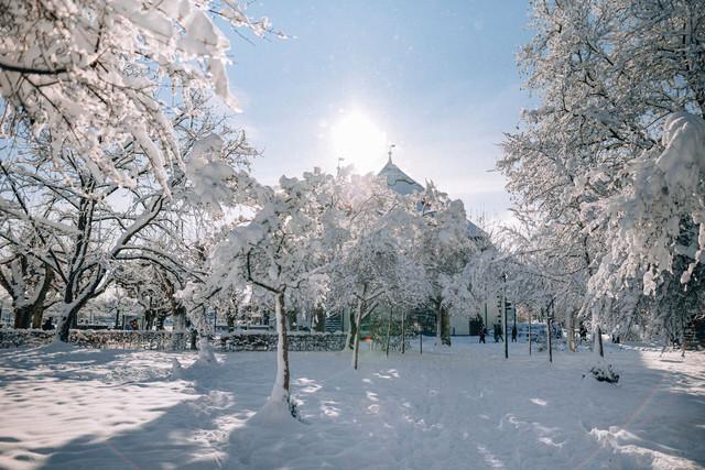 Konstanz-Konzil-Stadtgarten-Baeume-Sonne-Schnee-Querformat-02_Winter_Copyright_MTK-Leo-Leister