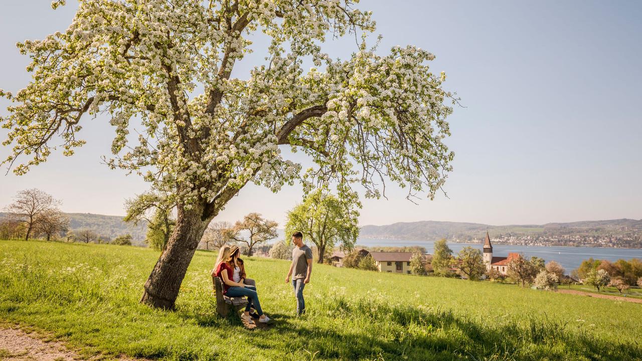 Konstanz-Im-Gruenen-Obstbluete-09_Fruehling_Copyright_MTK-Dagmar-Schwelle